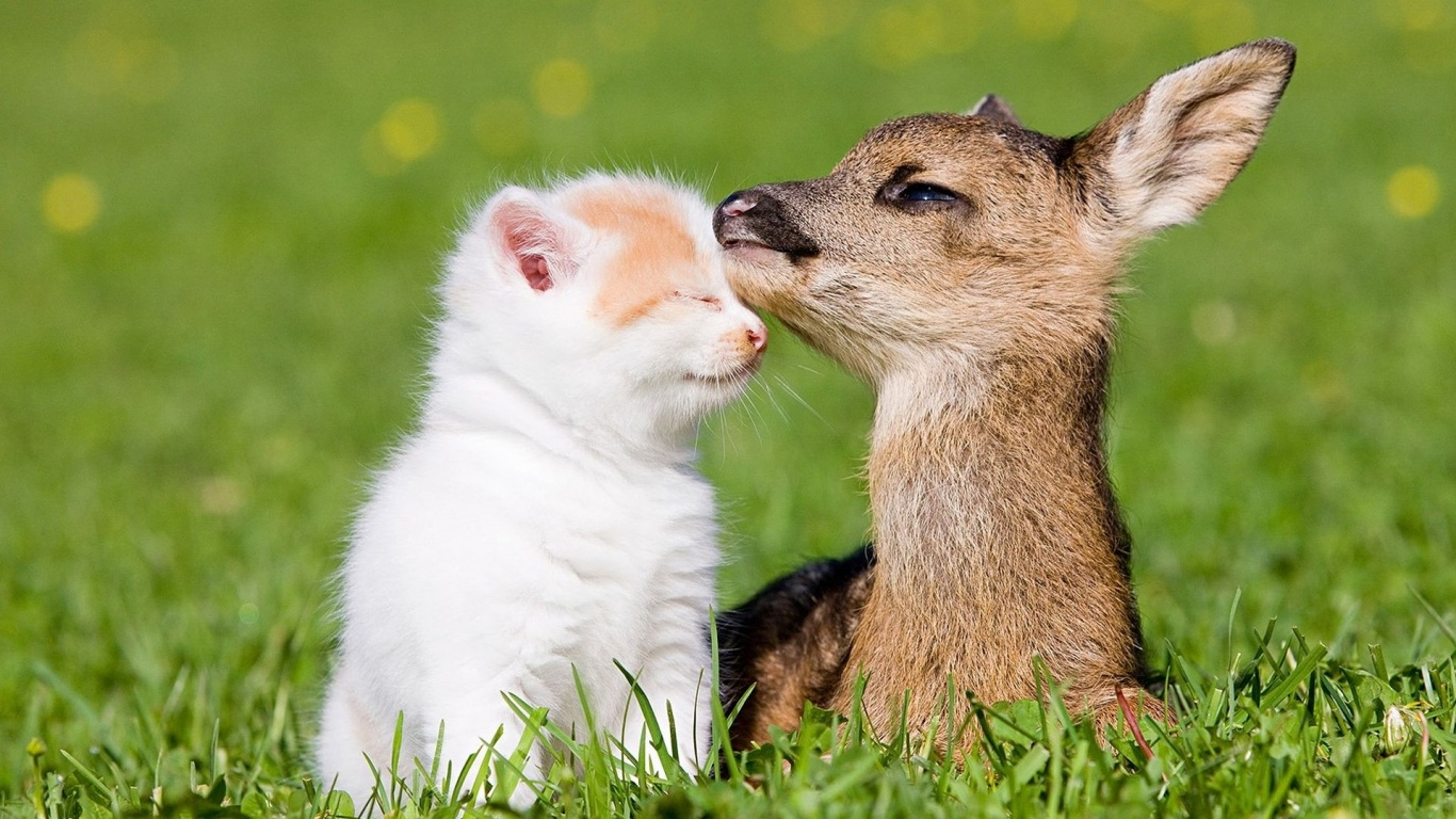 Friendship of Kitten and Fawn