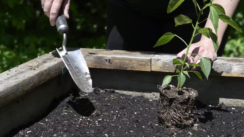 https://www.shutterstock.com/video/clip-16729984-stock-footage-chicago-il-march-gardener-digging-a-hole-with-a-shovel-to-place-plants-in-a-gardening.html?src=rel/5091023:9