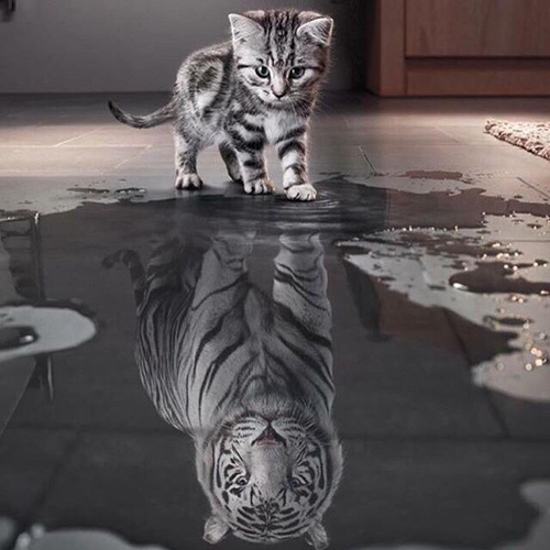 Photo Via: typepad.com, kitten seeing self as lion, self-confidence, how you see yourself, kittens reflection.