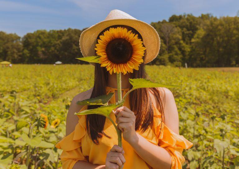 Types of Love Sunflower